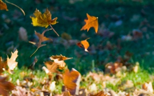 Autumn Leaf Creative Movement Dance